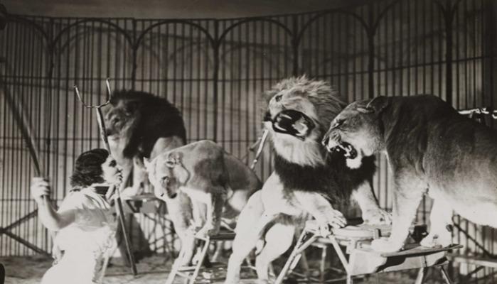 images-cirque-lion-noir-et-blanc