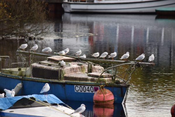 article résilience - image oiseaux sur bateau